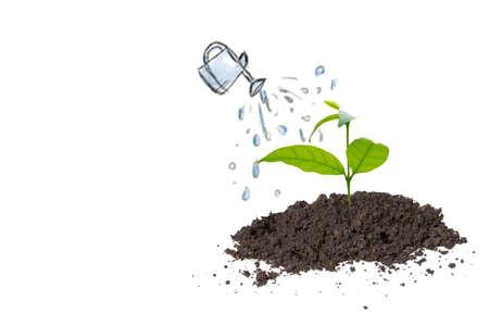 watering on plant 写真素材