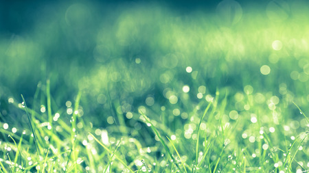 Abstract natural background. Fresh spring grass with drops on natural defocused light green background. Retro filtered. Cross process.