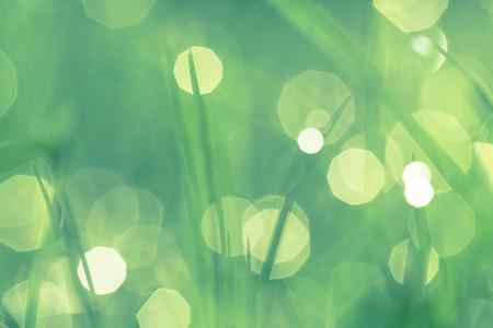 아침에 물 방울과 녹색 잔디. 나뭇잎과 배경을 흐리게 아름 다운 여름 배경. 필드의 낮은 깊이.