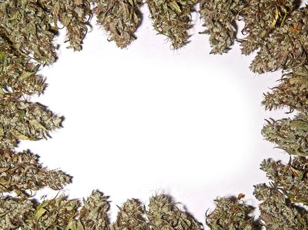 Dry green organic cannabis buds background border
