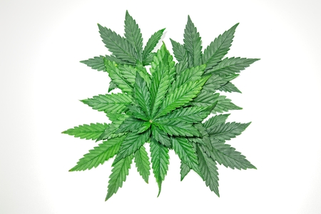 Pile of green cannabis / hemp / ganja / marihuana leafs on white background. Banco de Imagens - 99357158
