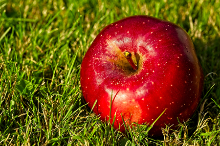Singel nice big red apple on green grass. Archivio Fotografico - 115168181