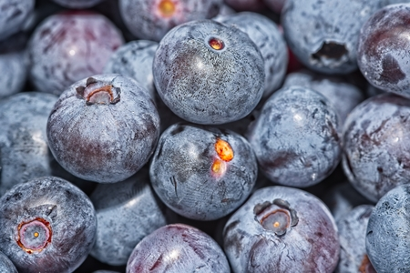 Full frame of macro close up of picked blueberries Archivio Fotografico - 115168784
