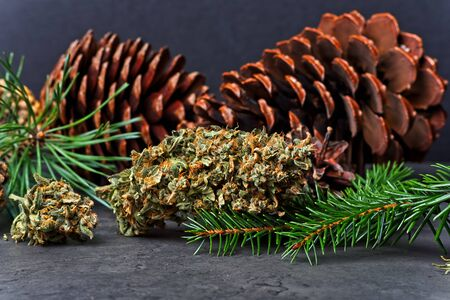 Cannabis nug  bud  with pine cones and fir and pine needles. Pinene terpene concept on gray background.