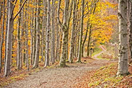 Romantic path in autumn beech forest Banque d'images - 129369595