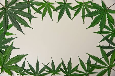 Green cannabis leafs frame with usable copy space in the middle