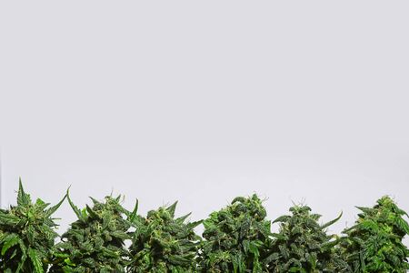 Border from cannabis buds on light background. Stock fotó