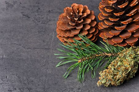 Cannabis nug  bud with pine cones and needles. Pinene terpene concept on gray background with copy space.