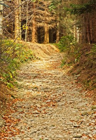 Romantic path in autumn beech forest Stock Photo