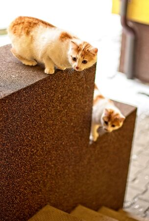 Two young ginger and white domestic cat brother kittens on front doorstep looking towards camera. Stock Photo