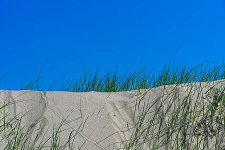 Dune grass and blue horizon on the Hondsbossche Zeewering coastal barrier at Netherlands coast Archivio Fotografico