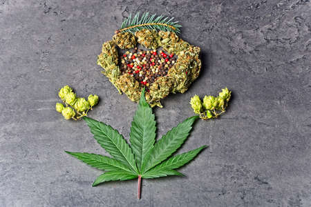 Cannabis bud and leaf with hoppy, pepper and fir needles Caryophyllene, humulene and pinene terpenes concept on grey background. Archivio Fotografico