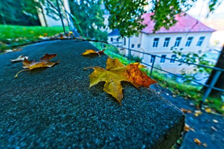 Vivid orange and yellow colored leaf on low wall by a path in early Autumn / fall with some building with red roof in background. Archivio Fotografico