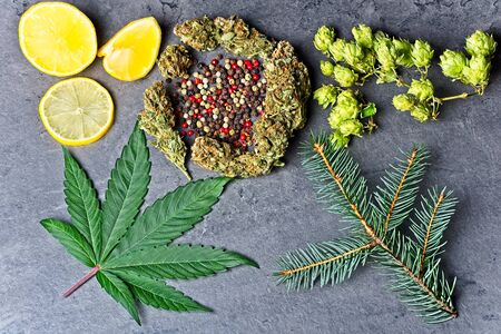 Cannabis bud and leaf with hoppy, pepper, lemons and fir needles Caryophyllene, humulene limonene and pinene terpenes concept on grey background, top view.