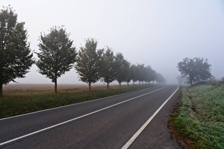 Straight empty country road with tree alley leading into morning fog / mist on the horizont. Archivio Fotografico