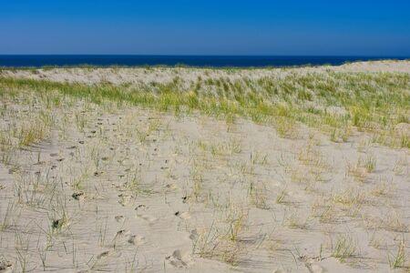 Dune grass and blue see horizon on the Hondsbossche Zeewering coastal barrier at Netherlands coast Archivio Fotografico