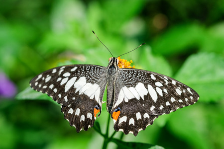 A  butterfly feeding on flower in a summer garden Stock Photo