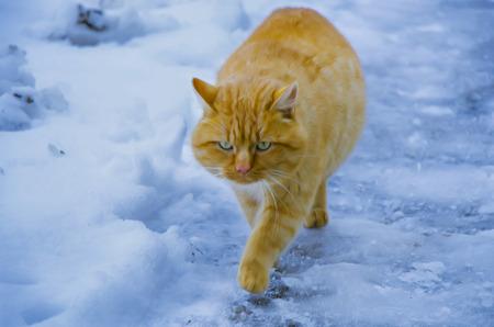 foxy: Foxy cat walking on the street Stock Photo