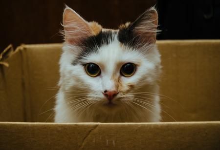 beaux yeux: Chat avec de beaux yeux � la recherche de la bo�te