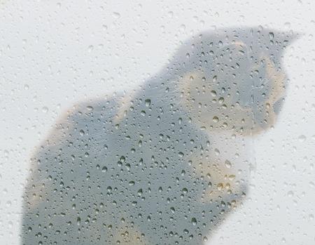 rain window: Double exposure of the cat and rain window Stock Photo