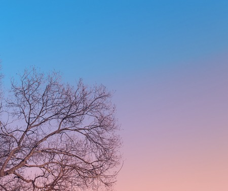 personal point of view: Branches of the tree on blue sky background Stock Photo