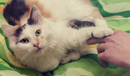 A children hand is playing with cat