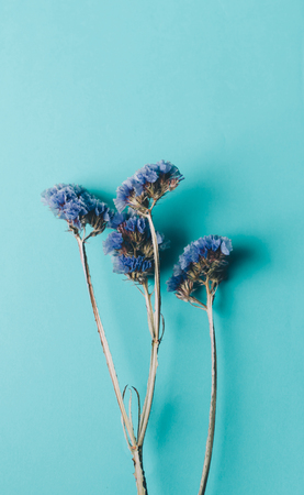 Dry blue flowers on the blue background