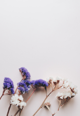 Purple and white dry flowers on the pink wall background