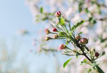 Bloemen van de bomen in de lentetijd op hemelachtergrond