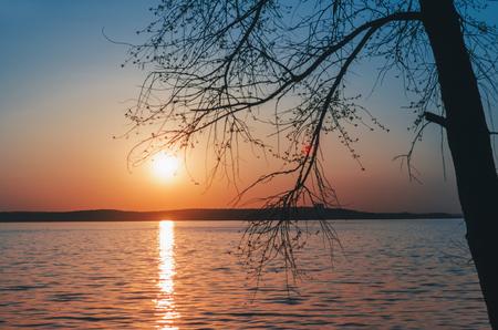 Lake landscape with sun and tree on beach Standard-Bild