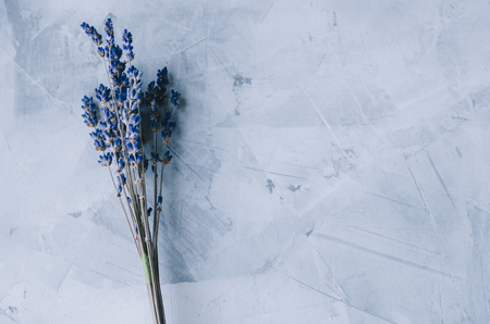 Dry flowers in interior on dark background Stockfoto - 117237846