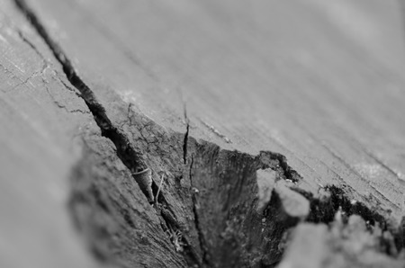 Cut tree stem in detail with visible summers (age rings) and cracks in wood. photo