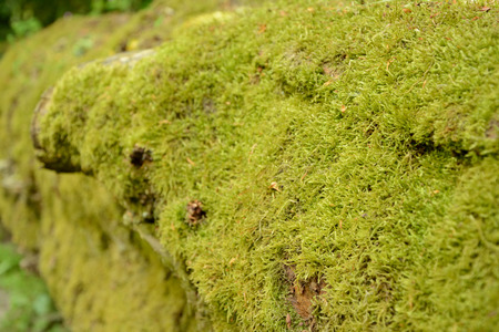 fallen tree: Fallen tree trunk fully covered with moss Stock Photo