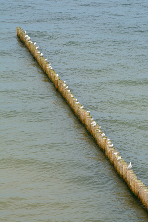 groyne: Wooden groyne and seagulls sitting on it - aerial view.