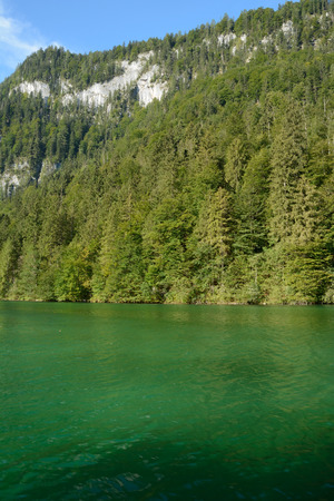 mountainside: Forest on mountainside at Koenigssee lake nearby Schonau in Germany