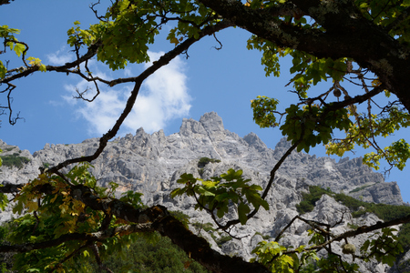 rocky peak: View through branches on rocky peak in Wimbachtal valley in Alps in Germany