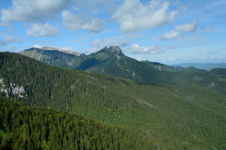 giewont: Jaworzynka valley, forest and Giewont peak in Tatra mountains nearby Zakopane in Poland