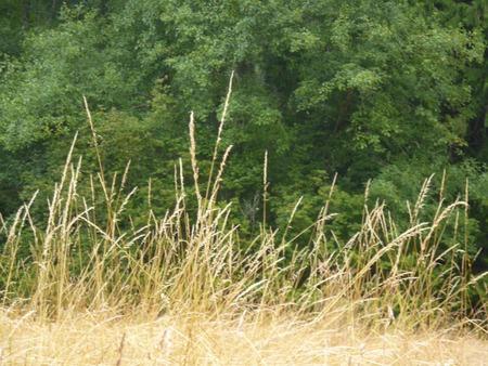 Grass up close