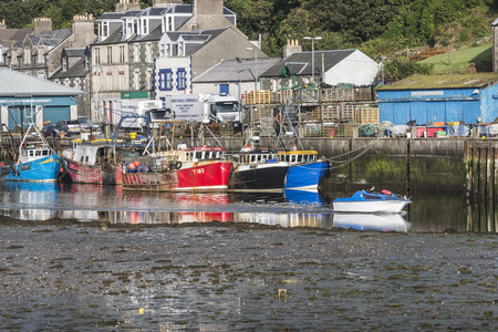 fishing fleet: Fishing fleet at Tarbert Harbour in Argyll in Scotland.