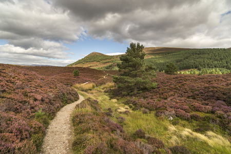 strathspey: Glen Feshie path across heather and moor in the Cairngorms National Park in Scotland. Stock Photo