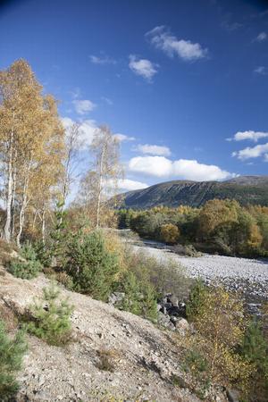 Glen Feshie in the Scottish Highlands.