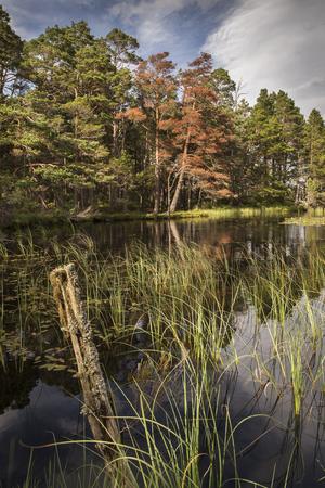 strathspey: Autumn on Loch Garten in the Cairngorms National Park in Scotland.