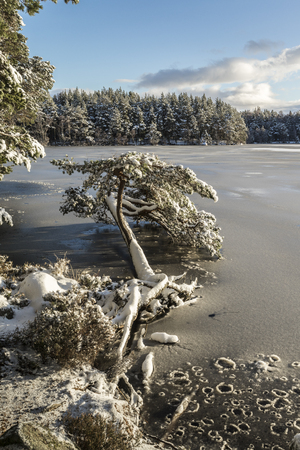 garten: Winter on Loch Garten.