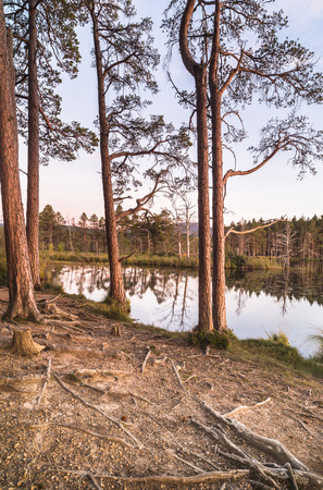 garten: Loch Mallachie in the Cairngorms National Park of Scotland.