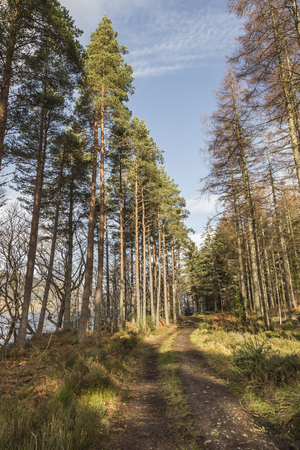 loch ness: Forest track at Dores by Loch Ness in Scotland.