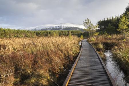 Boardwalk through marsh & reeds in Glen Feshie, Scotland Stock Photo
