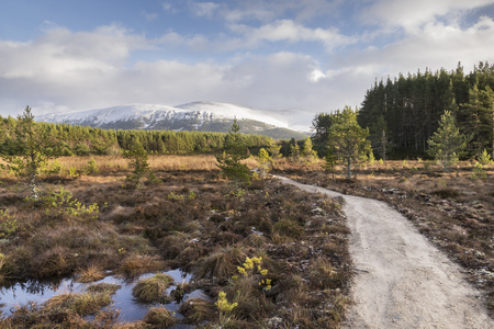 Path through Marsh at Uath Lochans in Glen Feshie, Scotland. Stock Photo