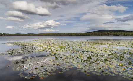 garten: Loch Garten water lilies in the Cairngorms National Park of Scotland.