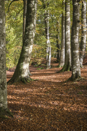 walk path: Burns Walk path in autumn at Glen Esk in Angus, Scotland.