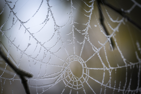 strathspey: Dew on Web at Abernethy Forest in Scotland. Stock Photo
